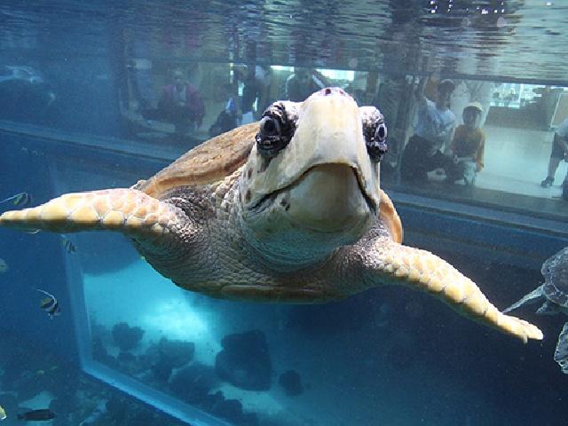 Ozeaneum - sekrety morskich głębin