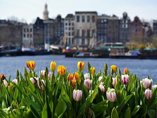 Amsterdam i festiwal tulipanów z NOCLEGI