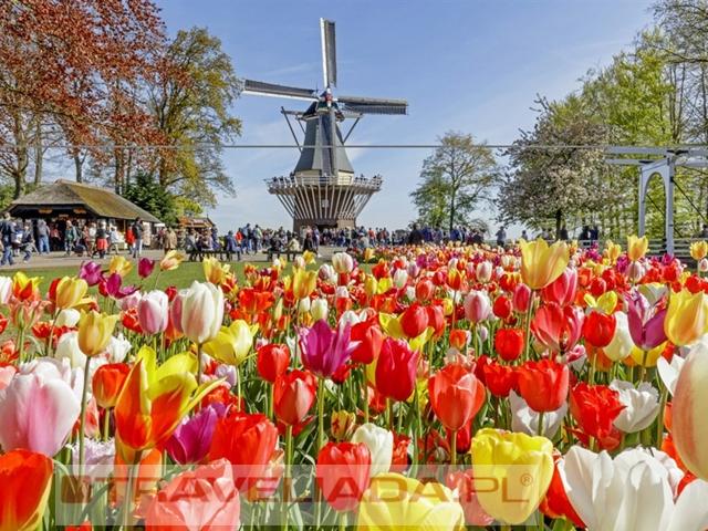Holenderskie Trio: Sery+Kwiaty+Zabytki