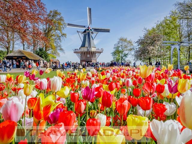 Wycieczka do Amsterdamu + Festiwal Tulipanów Express