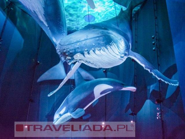 Stralsund - sekrety morskich głębin i ja