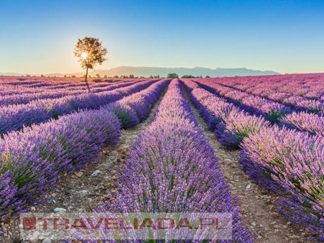Pola lawendy i perły południowej Francji