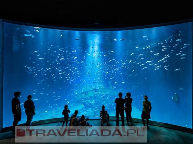 Bałtyckie Głębiny - Oceanarium + Straslu
